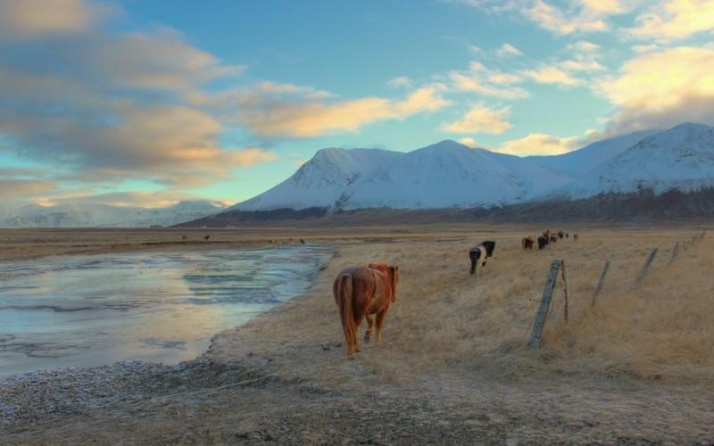 JOUR 11 : AKUREYRI ET SES ENVIRONS Iles de Grimsey - Skagafjörður