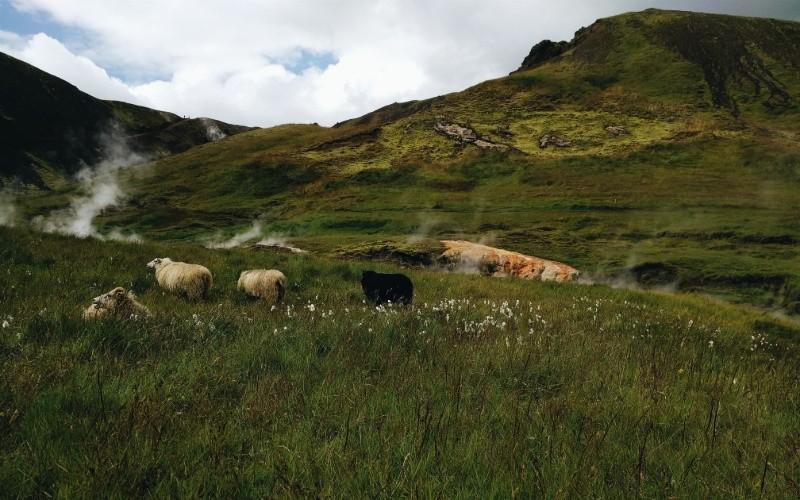 Jour 1 : Arrivée en Islande – Hveragerði