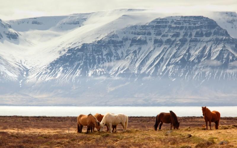 JOUR 7 : Varmahlíð – Reykholt – Borgarnes – Hvalfjörður – Reykjavík