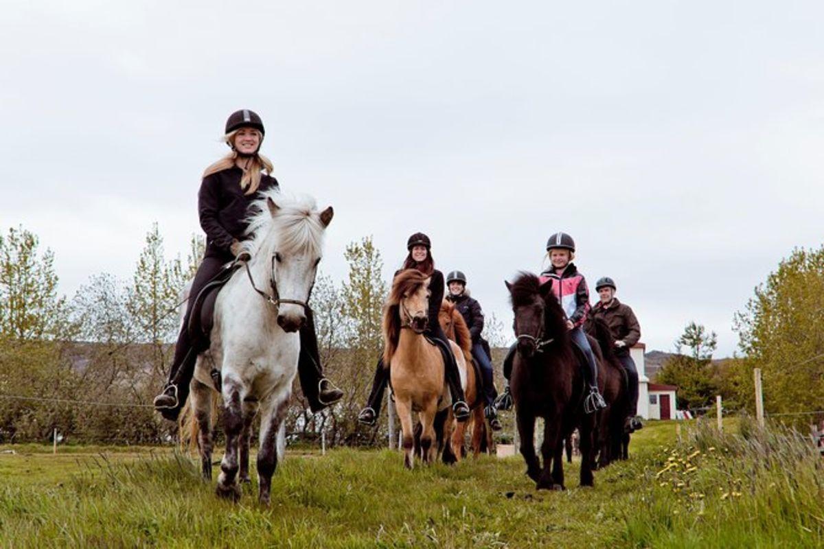 Balade à cheval à Akureyri