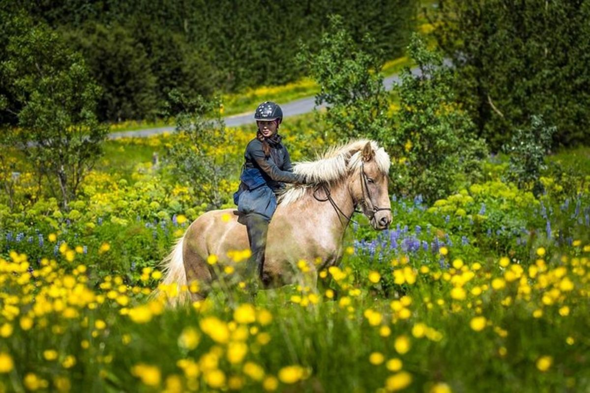 Promenade à cheval viking et excursion au Cercle d'or au départ de Reykjavik