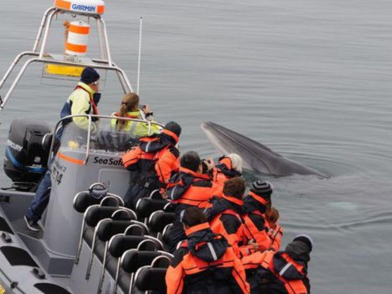 Observation des baleines premium à Reykjavík