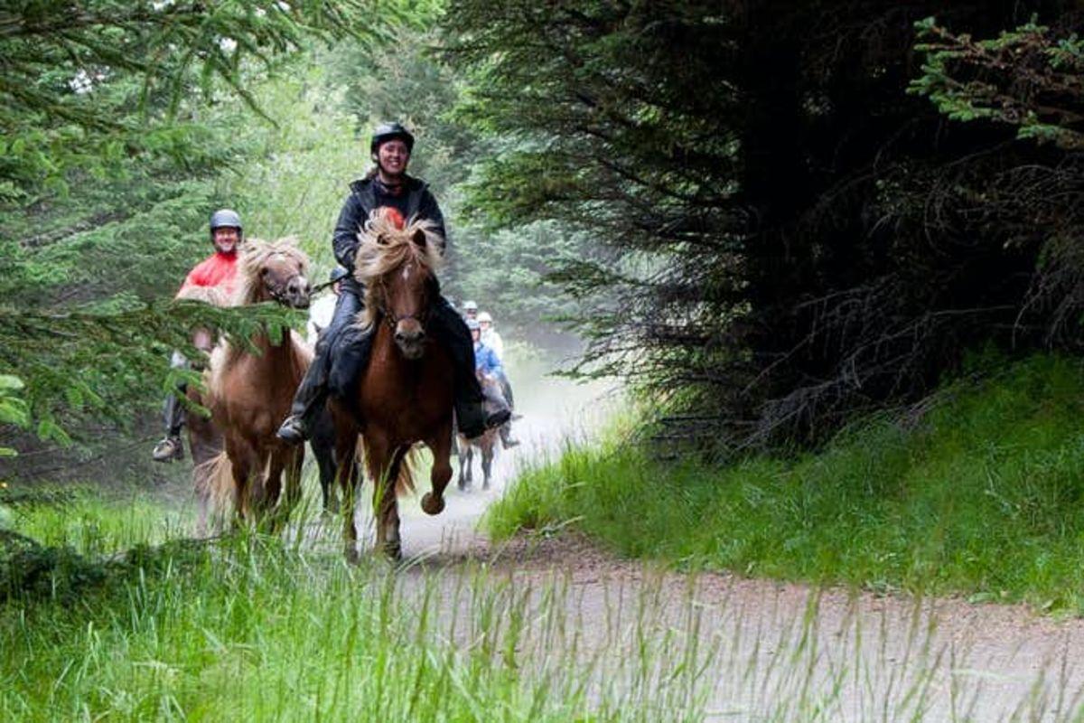 Balade à cheval de 3h au cœur de paysages géothermiques