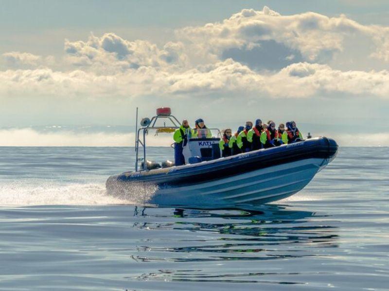 Observation des baleines en hors-bord à Reykjavík, Islande - En petit groupe